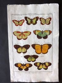 Diderot C1790 Antique Hand Col Print. Butterflies 15